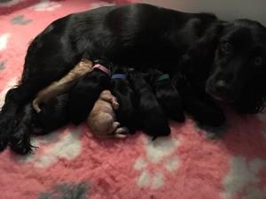 Joi och de nyfödda valparna
